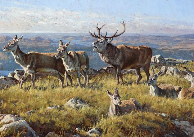 Early Rut, Sutherland