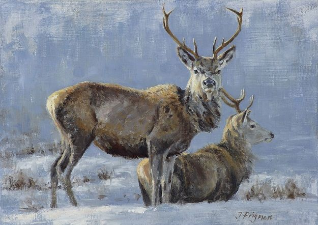 Winter Stags Study