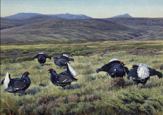 Glenavon Black Grouse